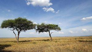 savanna-bg-1280x720