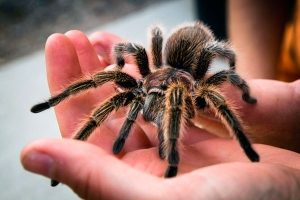 spider-tarantula-the-contents-of-the-house